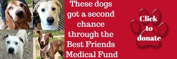 banner with photos of dogs that says Click to Donate