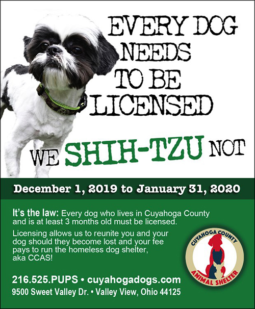 poster of shitzu dog that says Dog License