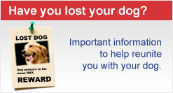 Have you lost your dog?