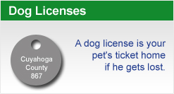 Dog Licenses